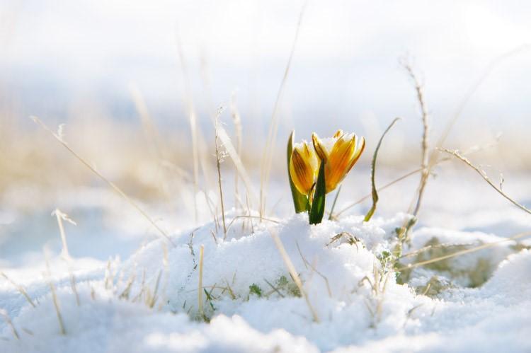 Chiharmonie, Transition hiver – printemps avec Amelie Sterchi le 14 mars 2020