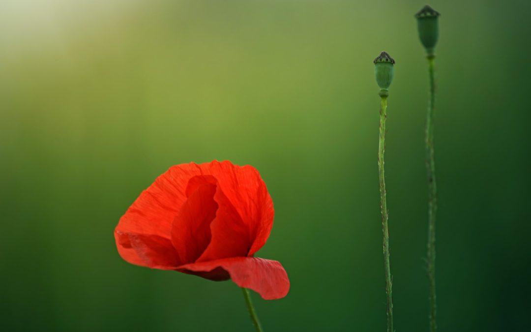 Yin Yoga & Acupuncture – accueillir l'été avec Sarah Geiser-Lemoine – samedi 16 et 31 mai 2020