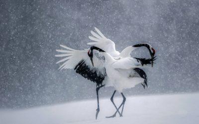 Yin yoga et Chiharmonie, accueillir l'hiver le 19 décembre 2020