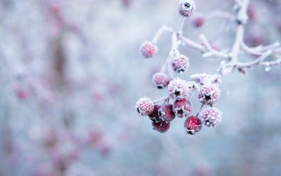 Yin Yoga & Acupuncture – accueillir l'hiver avec Sarah Geiser-Lemoine – samedi 14 novembre 2020