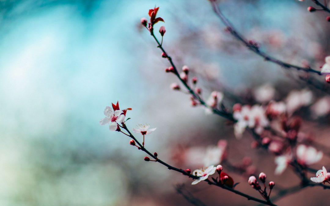 Yin Yoga & Acupuncture – accueillir le printemps avec Sarah Geiser-Lemoine – samedi 13 mars 2021